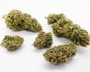 cbd buds with white background